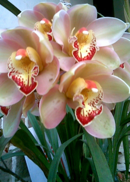 Orchid / Rs 1500 - 3000