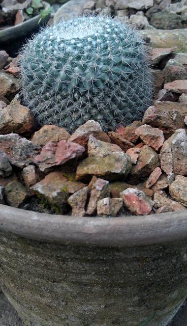 Noto Cactus / Rs 100 - 500
